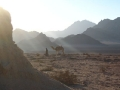 Morgenstimmung in der Arabischen Wüste